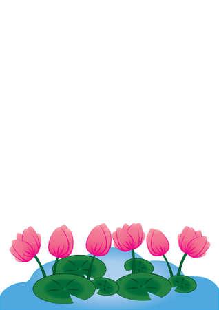 Lotus flowers on white background Illustration