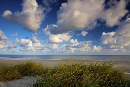 Dunes at the sea with green grass in Holland at sunset  Stock Photo