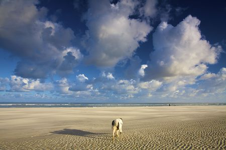 footing: a dog walking on the beach in summer with a blue sky and white clouds