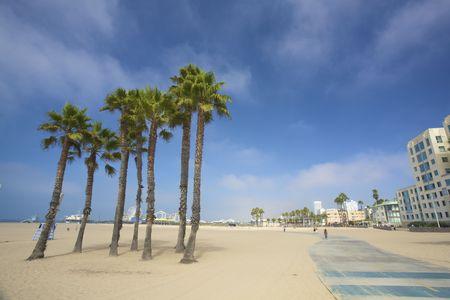 santa monica: Palms and the pier at Santa monica beach in Los Angeles