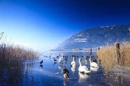 Gefroren See in den Alpen mit Schwänen und Enten auf Eis im winter
