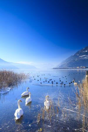 See in den Alpen mit Schwäne und Enten auf Eis im Winter eingefroren Standard-Bild - 5918842