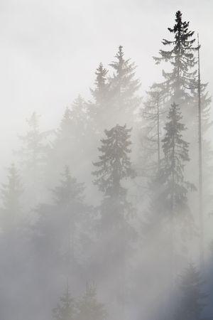 Forest in den Bergen in den Wolken mit Nebel Standard-Bild