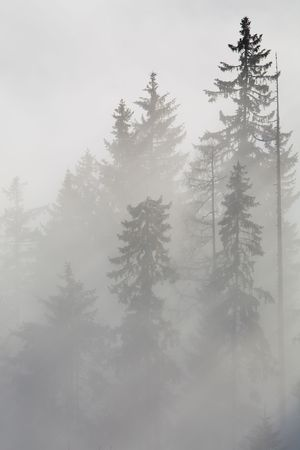 Forest in the mountains in the clouds with fog photo