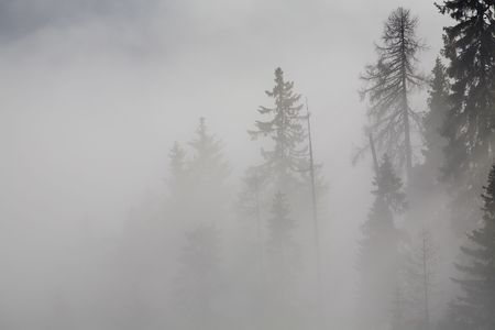 Forest in the mountains in the clouds with fog Stock Photo - 5932777