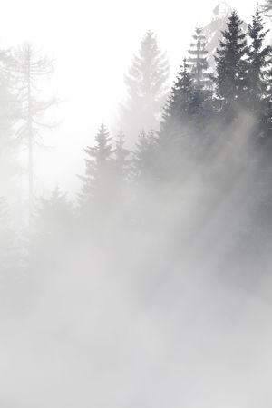 Forest in the mountains in the clouds with fog Stock Photo - 5932775