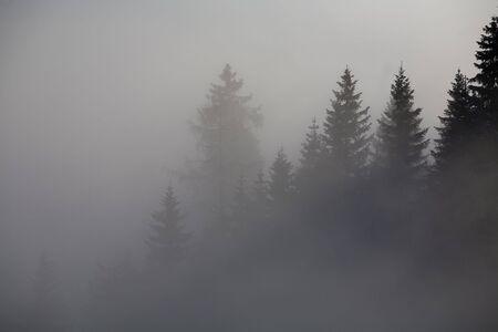 Forest in the mountains in the clouds with fog Stock Photo - 5932771