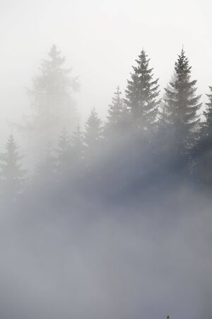 Forest in the mountains in the clouds with fog Stock Photo - 5932768