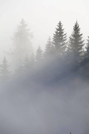Wald in den Bergen in den Wolken mit Nebel