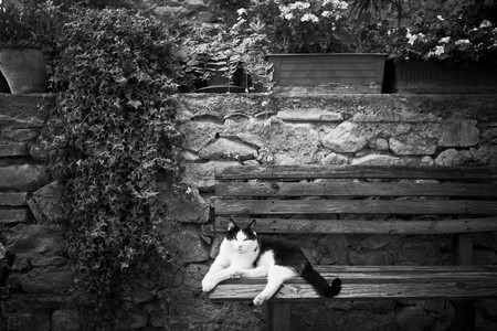 Italian cat in a garden on a bench