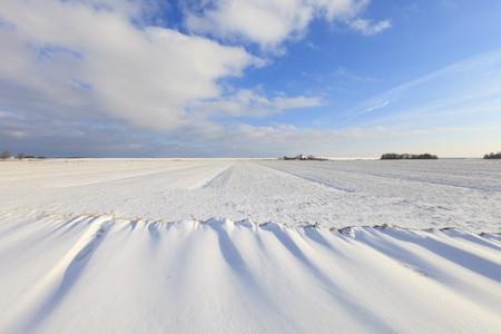 Fresh snow in winter in a Dutch landscape Stock Photo - 7421680