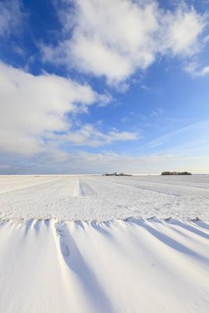 Fresh snow in winter in a Dutch landscape Stock Photo - 7421677
