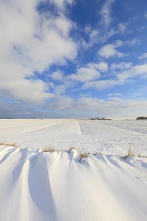 Fresh snow in winter in a Dutch landscape Stock Photo - 7421676