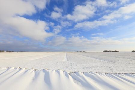 Fresh snow in winter in a Dutch landscape Stock Photo - 7421671
