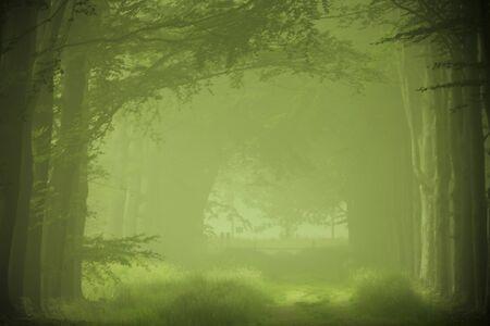 Grünen Wald im Nebel Standard-Bild