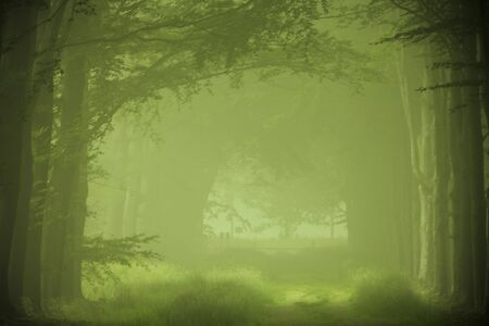 Green forest in the fog