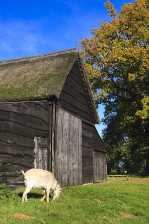 Autumn landscape with barn and goat Stock Photo - 7704213