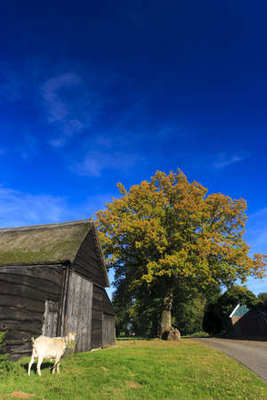 Autumn landscape with barn and goat Stock Photo - 7704201