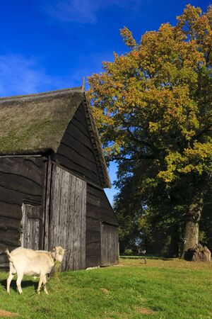 Autumn landscape with barn and goat Stock Photo - 7704197