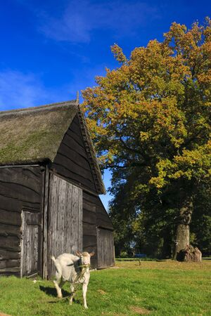 Autumn landscape with barn and goat Stock Photo - 7704195