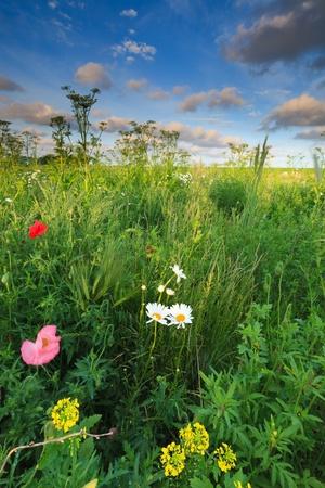 Schöne frische Bereich der Blumen im Sommer