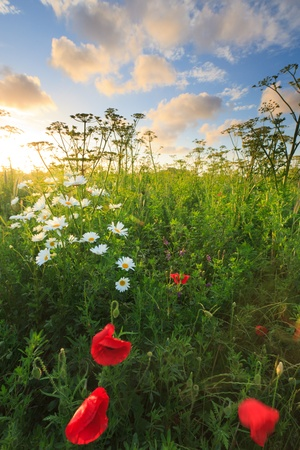 Beautiful fresh field of flowers in summer Stock Photo