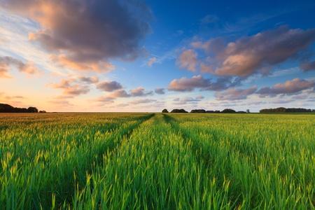 Frischen grünen Feld im Sommer