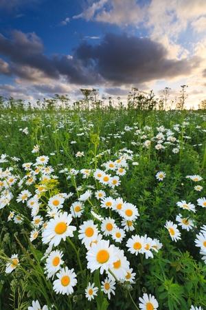 Schönen Bereich der Blumen im Sommer