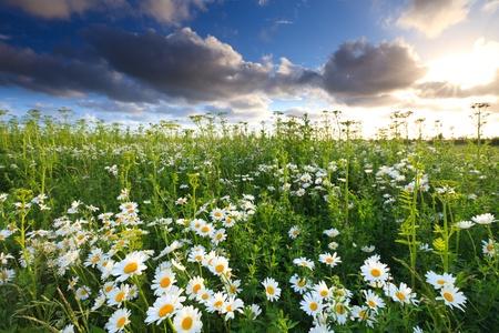 Beautiful field of flowers in summer