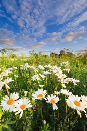 Schönen Bereich der Blumen im Sommer Standard-Bild - 9762611