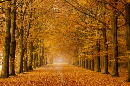 falls: Beautiful autumn lane in the forest Stock Photo