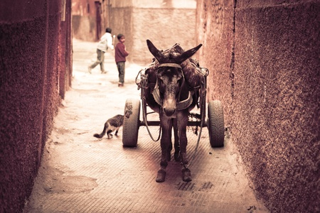 way of living: Streets of Marrakesh in Morocco