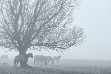 Pferde in einem Feld im Nebel