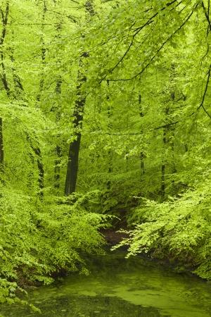 Frischer grüner Wald im Frühjahr Standard-Bild