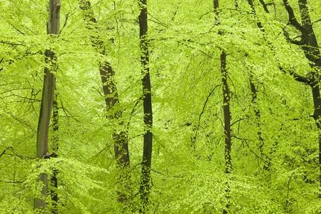 Fresh green forest in spring Standard-Bild - 13874988