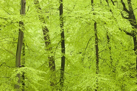 Frischer grüner Wald im Frühling Standard-Bild