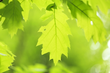 Green background with leaves Stock Photo - 13874968