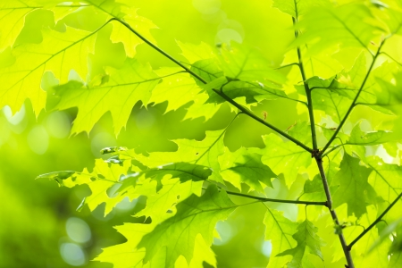 Green background with leaves photo