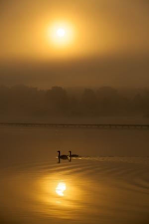 Schöne goldene Sonnenuntergang mit Nebel und Vögel