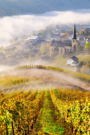 Vineyards in Autumn in the Moselle valley with a village and a church in the clouds on a beautiful fall morning in the countryside - Germany Zdjęcie Seryjne