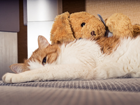 Portrait of yellow sad sick cat lying at home with rabbit toy Stock Photo - 28699252