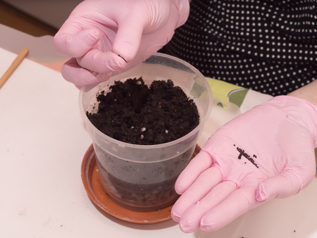 Woman hands prepare for cultivating home flowers at home photo
