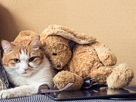 Portrait of yellow sad sick cat lying at home with rabbit toy photo