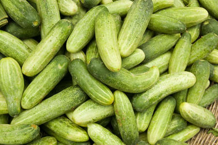 A heap of small cucumbers, or gherkins - latin name Cucumis anguria - for sale on a Cambodian market stall Stock Photo - 14240274