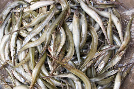 gar: A basket of needlenose gar fish, latin name  - xenentodon cancila, for sale on a market stall in Cambodia  Caught a few hours earlier in the Tonle Sap lake