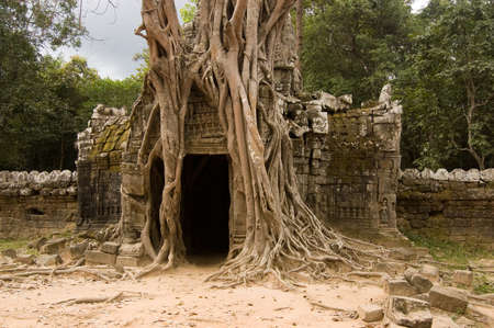 strangling: Gateway to the ancient Khmer temple of Ta Som, Angkor, Cambodia   Overgrown with a strangling fig, latin name Ficus aurea, tree  Stock Photo
