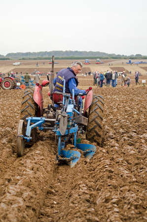 typically british: BASINGSTOKE, UK  OCTOBER 12, 2014: Peter Carman competing on a Massey Ferguson tractor in the second day of the British National Ploughing Championships organised by the Society of Ploughmen.  Competing in the National Vintage ploughing Championship  hydr Editorial