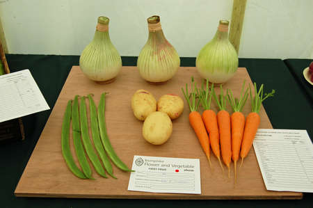 typically british: BASINGSTOKE, UK - JULY 7, 2007: Winning entry for the selection of vegetables class at the Basingstoke Flower and Vegetable show 2007.  Prize winning, perfect onions, beans, potatoes and carrots on display in a marquee. Editorial