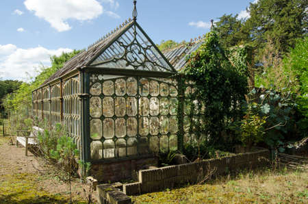 View of an old Victorian cast-iron greenhouse in an un-loved state.  Glass panes have been broken, the cast iron is cracking and the plants inside have grown leggy.