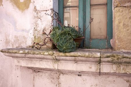 old window with succulent plant Stock fotó